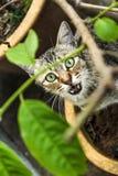 El gato de la calle Fotos de archivo