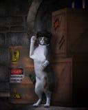 El gato de la calle Foto de archivo