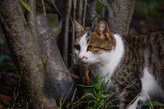 El gato de la caza Imagenes de archivo