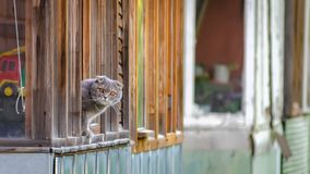 El gato de la ventana de la casa Foto de archivo libre de regalías