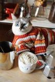 El gato de ojos azules blanco se vistió en el suéter rayado rodeado por los accesorios del café Café con crema azotada en taza di Fotografía de archivo libre de regalías