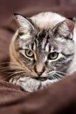 El gato de pensamiento Foto de archivo libre de regalías