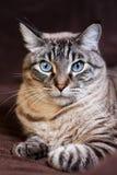 El gato de pensamiento Imagen de archivo libre de regalías