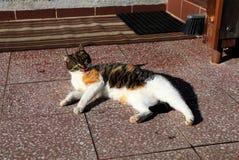 El gato del color se está limpiando y calor en las tejas Imágenes de archivo libres de regalías