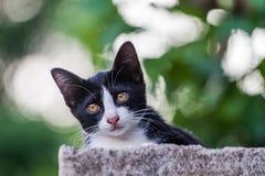 El gato del gatito de los retratos le gusta preguntarse todo alrededor en el fondo Imágenes de archivo libres de regalías