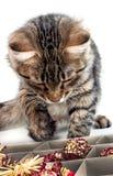 El gato del gris juega con los juguetes rojos de un Año Nuevo Imagenes de archivo