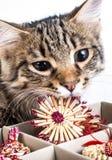 El gato del gris juega con los juguetes rojos de un Año Nuevo Fotos de archivo