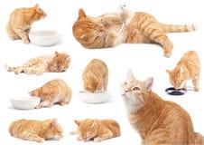 El gato del jengibre - actitudes fotos de archivo libres de regalías