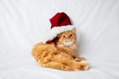 El gato del jengibre en sombrero rojo de la Navidad miente en cama Fotos de archivo