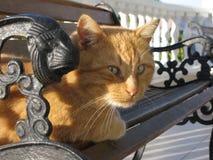 El gato del jengibre miente en banco forjado Foto de archivo