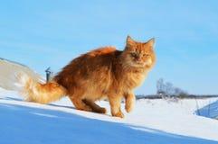 El gato del jengibre se está colocando en el tejado Imagenes de archivo
