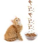 El gato del jengibre se sienta Fotografía de archivo