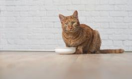 El gato del jengibre se sienta alrededor del cuenco de la comida y espera la comida Fotografía de archivo