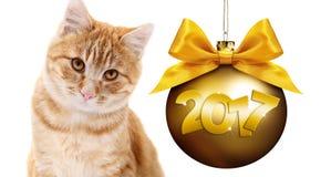 El gato del jengibre y la bola de oro de la Navidad con la cinta de satén del oro arquean Fotografía de archivo