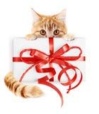 El gato del jengibre y el paquete del regalo de la Navidad con la cinta roja arquean, isola fotos de archivo libres de regalías