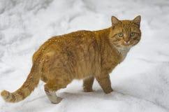 El gato del rojo de la calle imagen de archivo