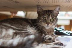 El gato despertado foto de archivo