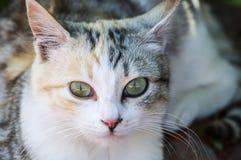 El gato, diversas catedrales de los ojos, gatito el dormir, cansó el gatito, los ojos de gato más hermosos, gatito observado herm imagen de archivo