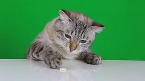 El gato divertido que se sienta en la tabla y lame la invitación almacen de metraje de vídeo