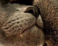 El gato el dormir imagen de archivo libre de regalías