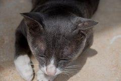 El gato duerme baño del sol imagen de archivo libre de regalías