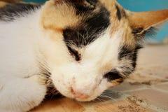 El gato duerme en el cemento en el parque Imagen de archivo libre de regalías