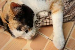 El gato duerme en el cemento en el parque Imagen de archivo
