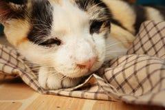 El gato duerme en el cemento en el parque Fotografía de archivo