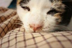 El gato duerme en el cemento en el parque Foto de archivo libre de regalías