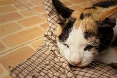 El gato duerme en el cemento en el parque Fotos de archivo