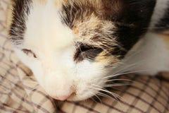 El gato duerme en el cemento en el parque Imágenes de archivo libres de regalías