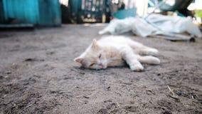 El gato duerme en la tierra, despierta y abre lentamente su primer de los ojos, movimiento de la cámara, cámara lenta metrajes