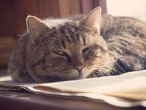 El gato duerme en la ventana Fotos de archivo libres de regalías