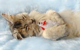 El gato duerme sosteniendo un ratón del juguete Fotografía de archivo libre de regalías