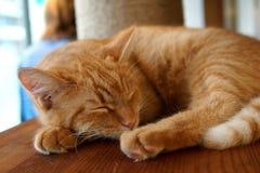 El gato el dormir foto de archivo libre de regalías