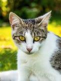 El gato embarazada del adulto se está sentando en el jardín Imagen de archivo libre de regalías