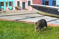 El gato en Burano cerca de Venecia Imágenes de archivo libres de regalías