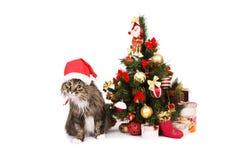 El gato en casquillo rojo de la Navidad se sienta por el árbol de navidad fotografía de archivo