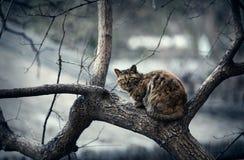 El gato en el árbol Imagen de archivo libre de regalías