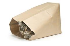 El gato en el bolso Imágenes de archivo libres de regalías