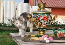 El gato en el samovar Fotografía de archivo libre de regalías