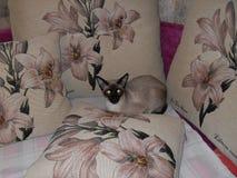 El gato en el sofá Imágenes de archivo libres de regalías