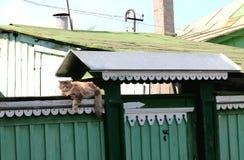 El gato en la cerca Fotos de archivo