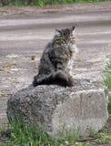 El gato en la piedra Fotografía de archivo libre de regalías