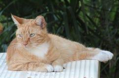 El gato en la tabla imagen de archivo libre de regalías