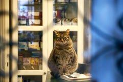 El gato en la ventana se sienta en el libro abierto Fotos de archivo libres de regalías