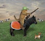 El gato en un caballo negro pasta vacas imagenes de archivo