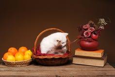 El gato en un mimbre tomó el sol con las naranjas Fotos de archivo libres de regalías