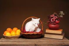 El gato en un mimbre tomó el sol con las naranjas Foto de archivo libre de regalías