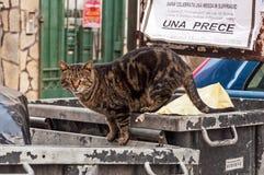 El gato entre la basura Fotos de archivo libres de regalías